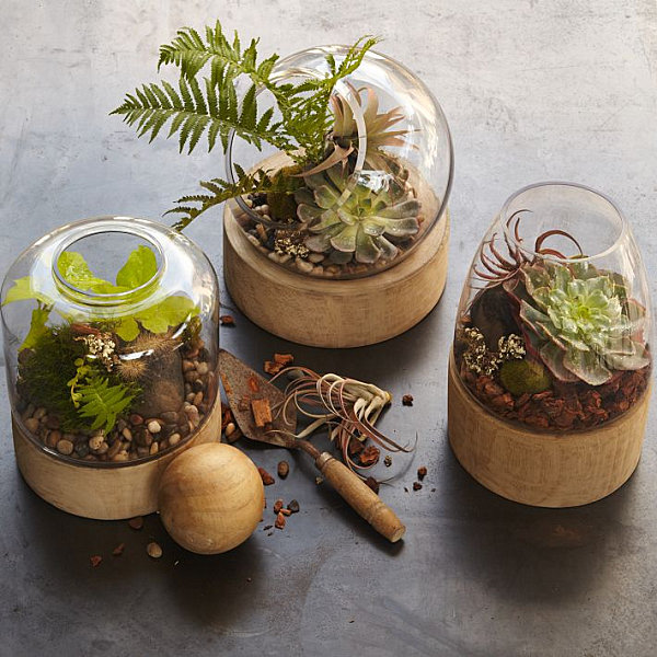 Glass and wooden terrariums