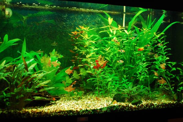 Beautiful home fish tank looks balalnced and vivid decoist Beautiful aquariums for home