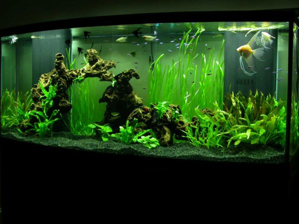 Beautiful underwater vegetation gives this modern aquarium a unique appeal