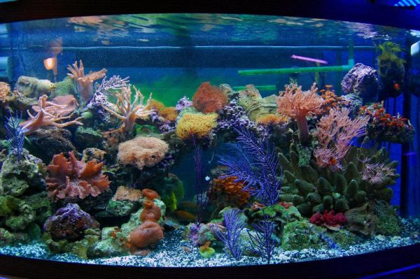 Coral placed with care can create stunning and visually grand fish tanks