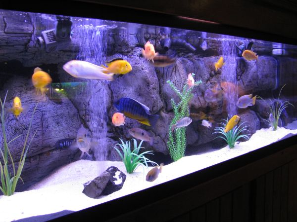 Elegant modern aquarium with a cool backdrop