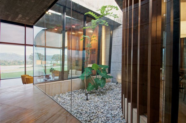 Interior Gardens in modern homes (14)