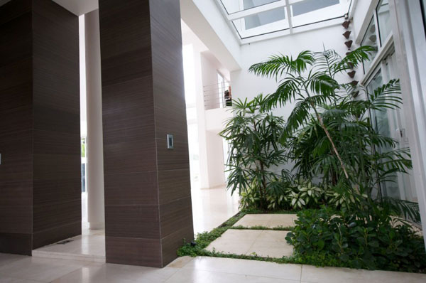 Interior Gardens in modern homes (6)