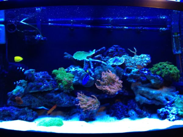 Lovely coral fish tank with plenty of color