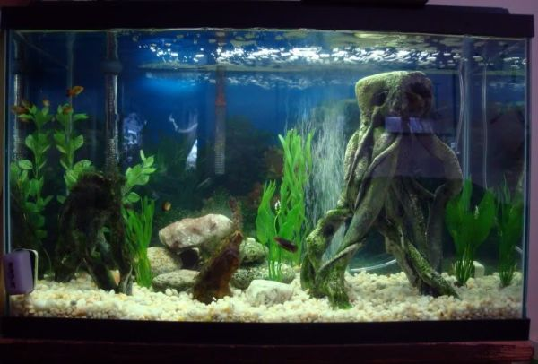 Fish tank interior design ideas native home garden design for Clean fish tank