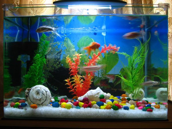 Playful and contemporary fish tank