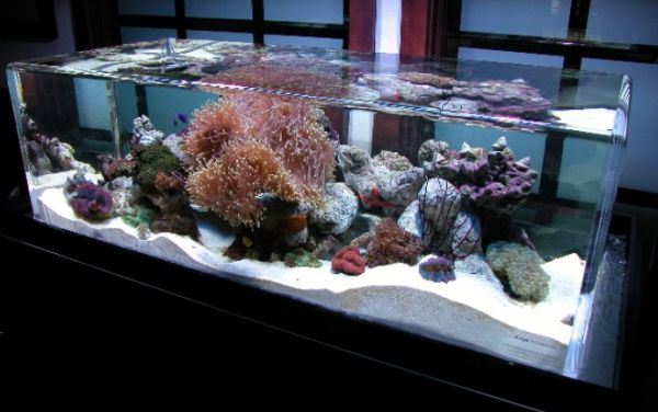 28 modern fish tanks that inspire relaxation for Marine fish tanks