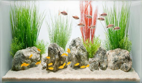 Simple and stylish fish tank design