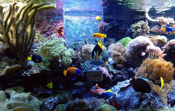 Spectacular fish tank seems to contain every possible color and shade!