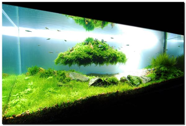 Stunning fish tank design that really kicks in with the green 28 ...