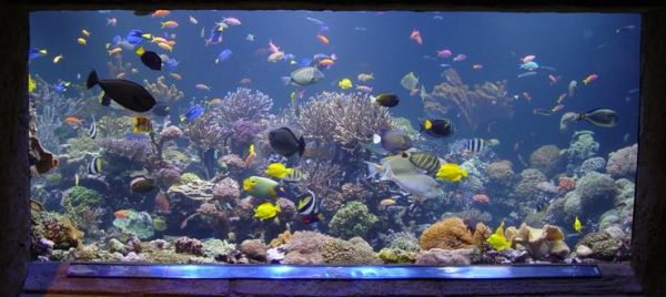 tropical aquarium designs offer plenty of color and wide variety view in gallery stylish fish tank all about creating the cool blue ocean indoors - Freshwater Aquarium Design Ideas