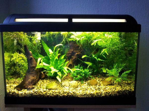 view in gallery tropical aquarium designs offer plenty of color and wide variety - Freshwater Aquarium Design Ideas