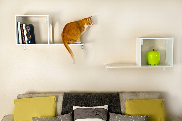 Wall-mounted cat tree