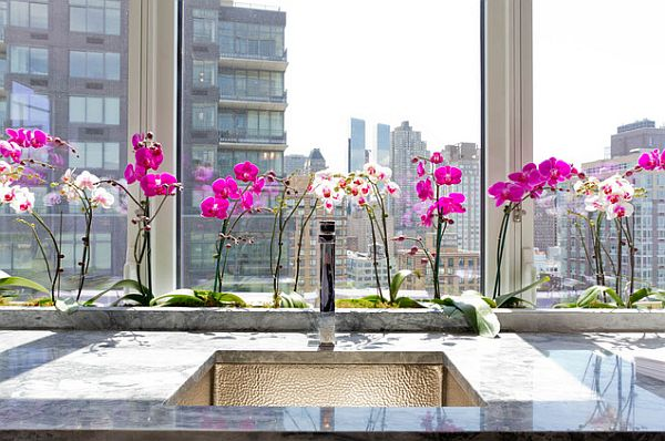 Purple and white orchids in the kitchen