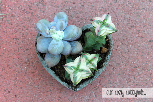 DIY Concrete Heart-Shaped Planter