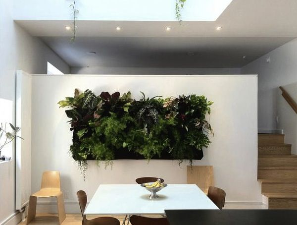 Lush green living wall in a stylish modern home