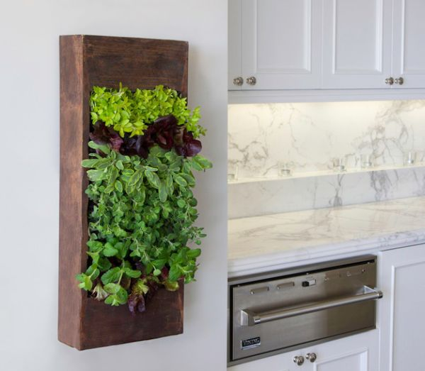 Small herb living wall for the kitchen