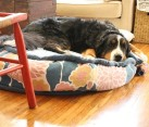 Circular fabric dog bed DIY