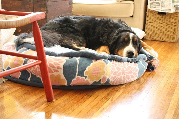 Circular fabric dog bed DIY Cool DIY Dog Beds With a Fancy Twist