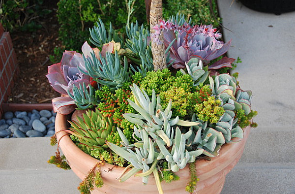 Color in a planter of succulents