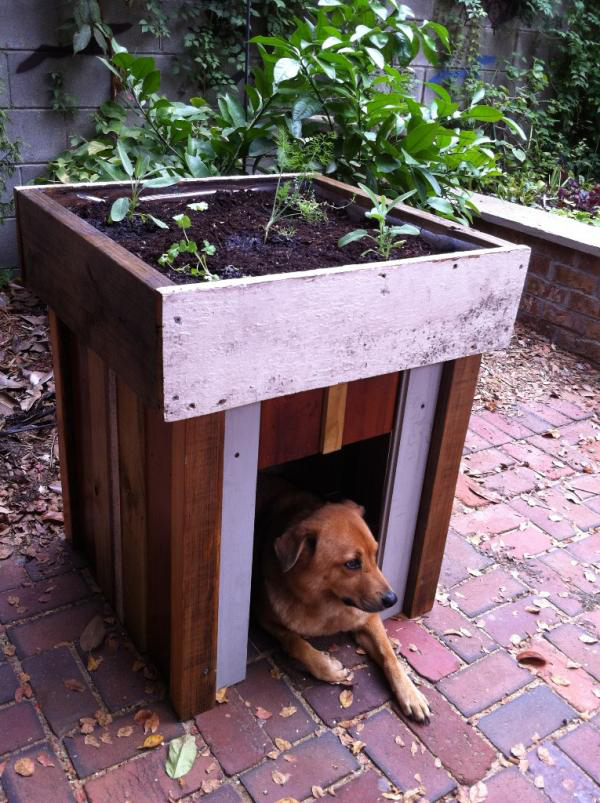 DIY Green Roof Dog House Vegetable Garden