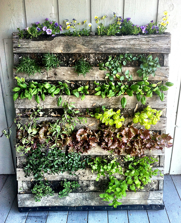 Home gardening in unusual spaces for Pallet veggie garden