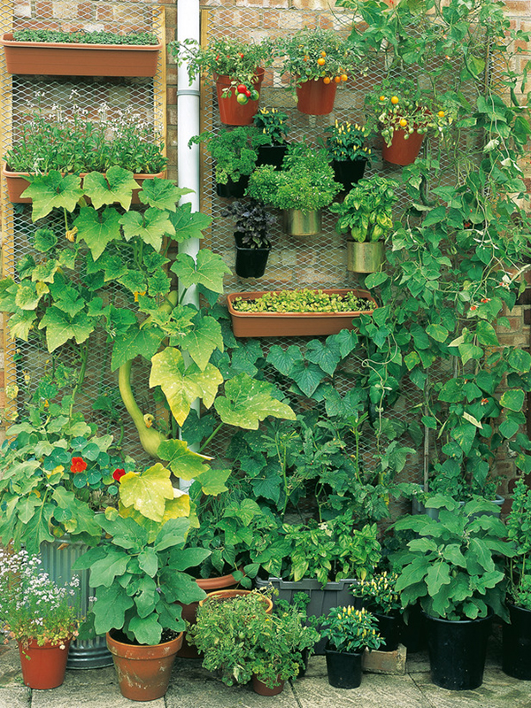 Home gardening in unusual spaces for Home vertical garden