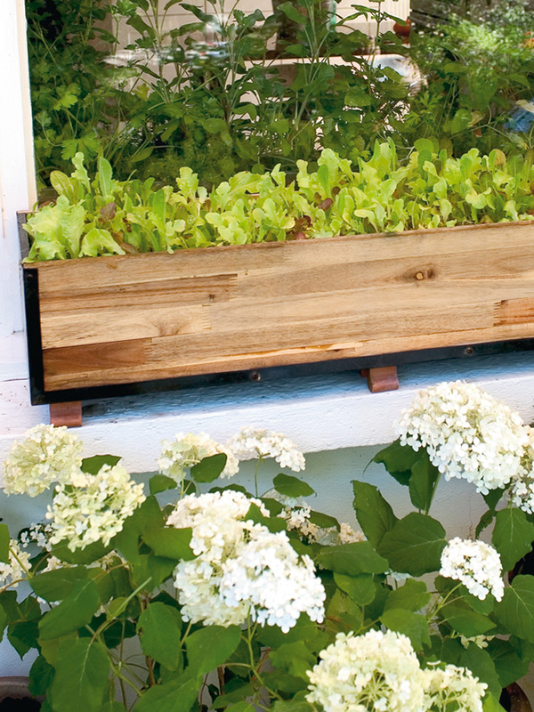 DIY Window Box Vegetable Garden