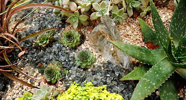 Details in a succulent arrangement