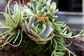10 Unforgettable Succulent Planter Arrangements