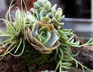 10 Unforgettable Succulent Planter Arrangements
