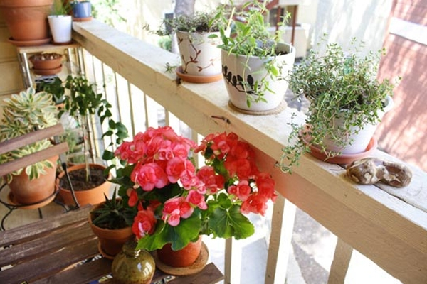Small balcony design ideas photos and inspiration for How to decorate terrace with plants