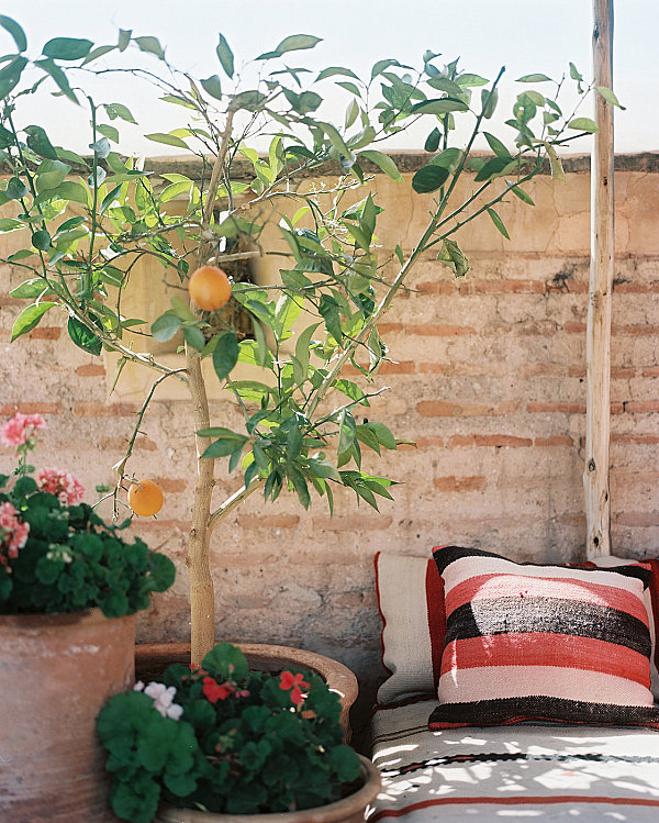 Lovely orange tree on a sunny patio