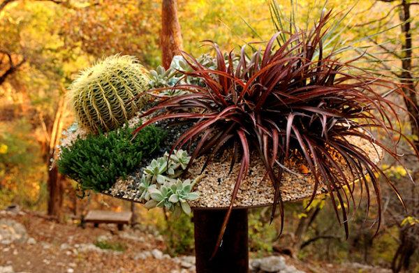 Raised succulent planter