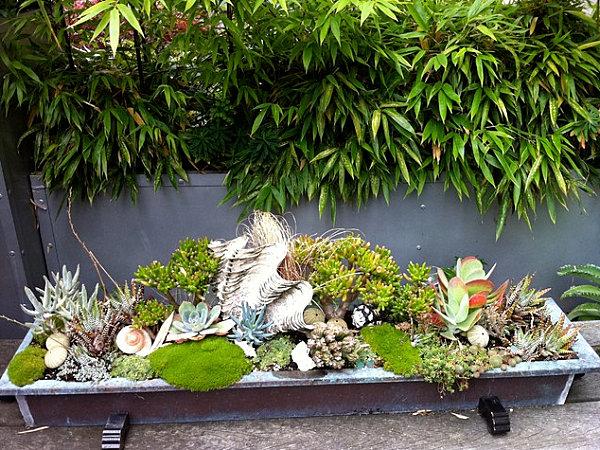 Succulent planter with seashells