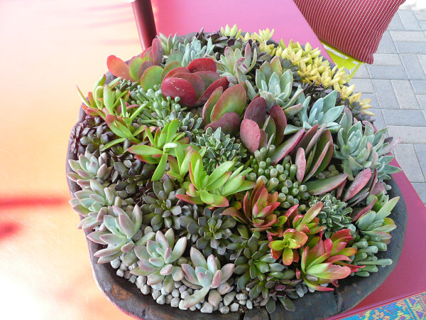 Succulent stripes 10 Unforgettable Succulent Planter Arrangements