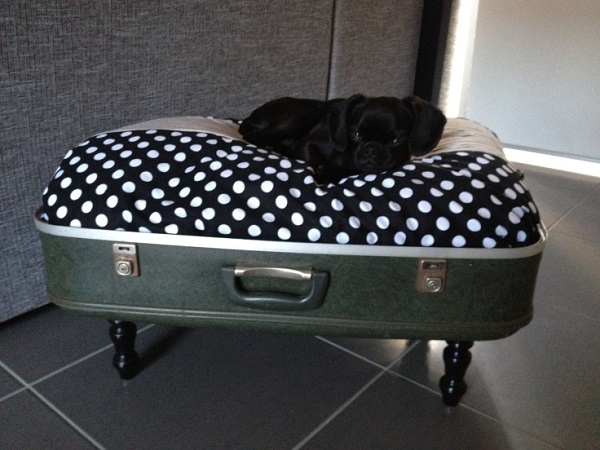 Suitcase dog bed with wooden legs