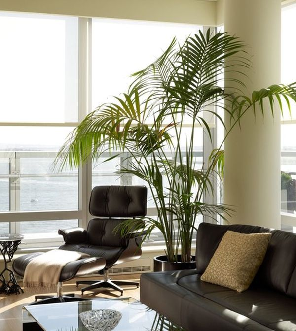 Touch of tropical goodness next to the Eames Lounge