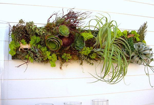 Wall succulent arrangement
