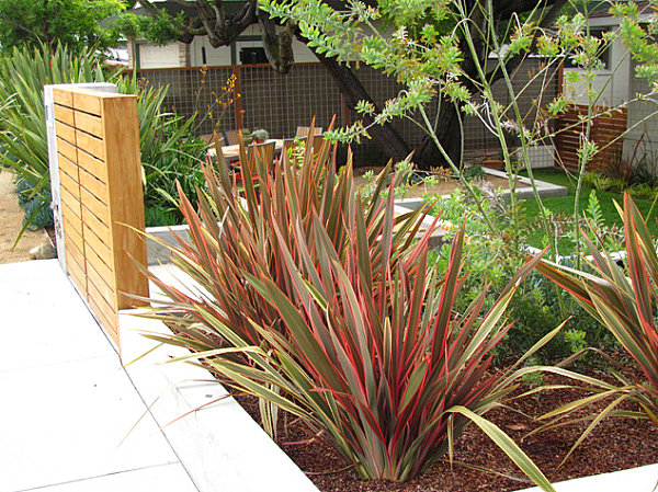 Spiky plants in a modern yard