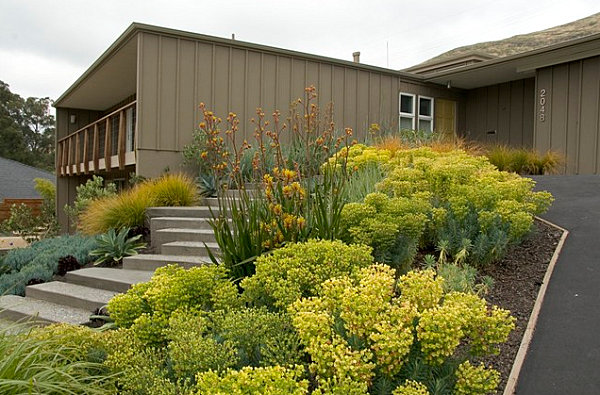 Stunning yellow plants in a modern front yard decoist for Front yard plant ideas