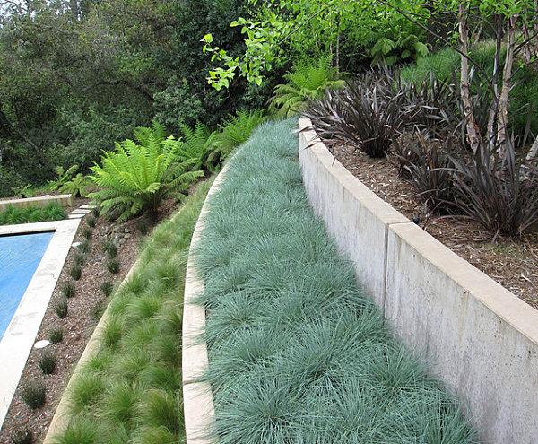 Grassy plants in rows
