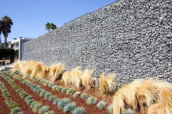 Plants arranged in rows