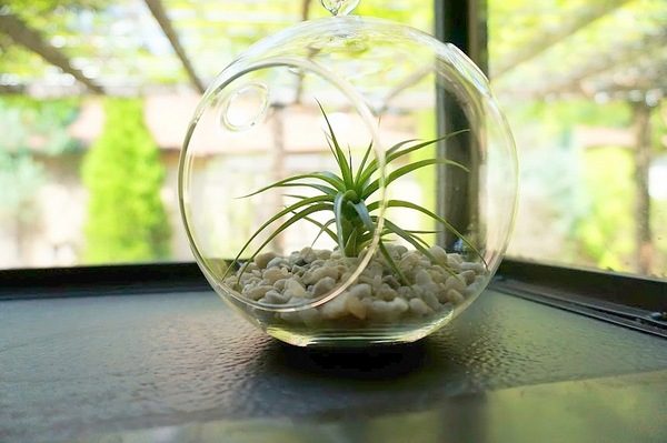 An air plant makes a big difference...