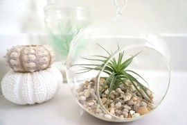 What a Difference an Air Plant Makes