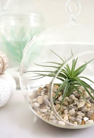Combine air plants with other unique decor