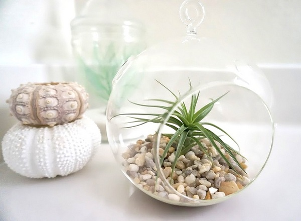 Air plant on a clean-lined counter