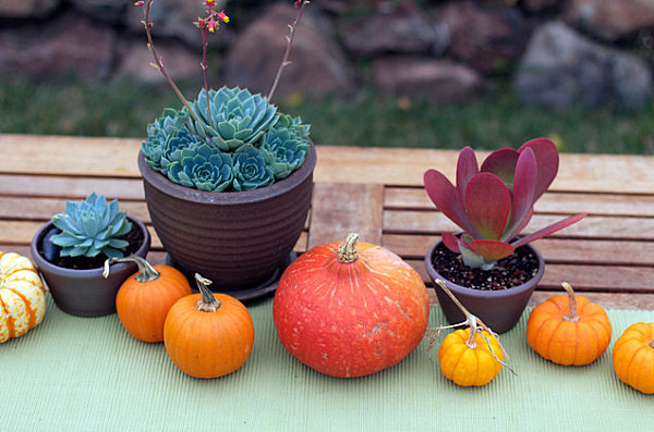 Fall centerpiece with succulents