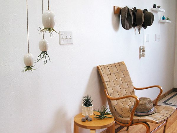 Hanging Air Plant Pod by Michael McDowell