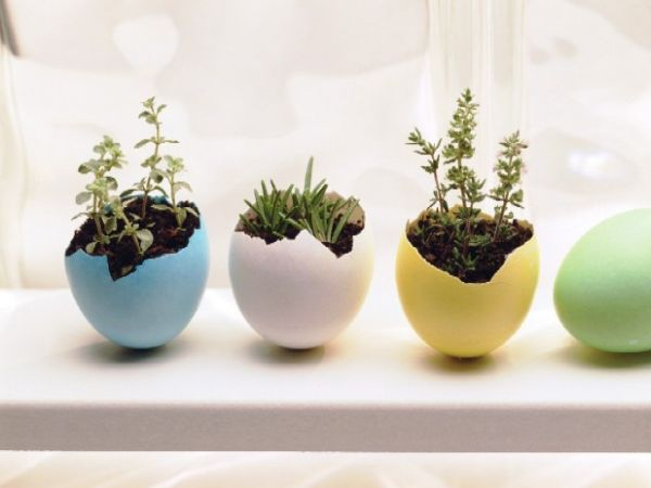 Innovative and cute DIY egg planters for the holiday season